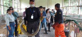 เจ้าหน้าที่หน่วยดับเพลิง จับงูเหลือมที่หมวดสัตว์ปีก คณะเกษตรศาสตร์